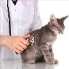 Ветеринарные клиники в Нолинске